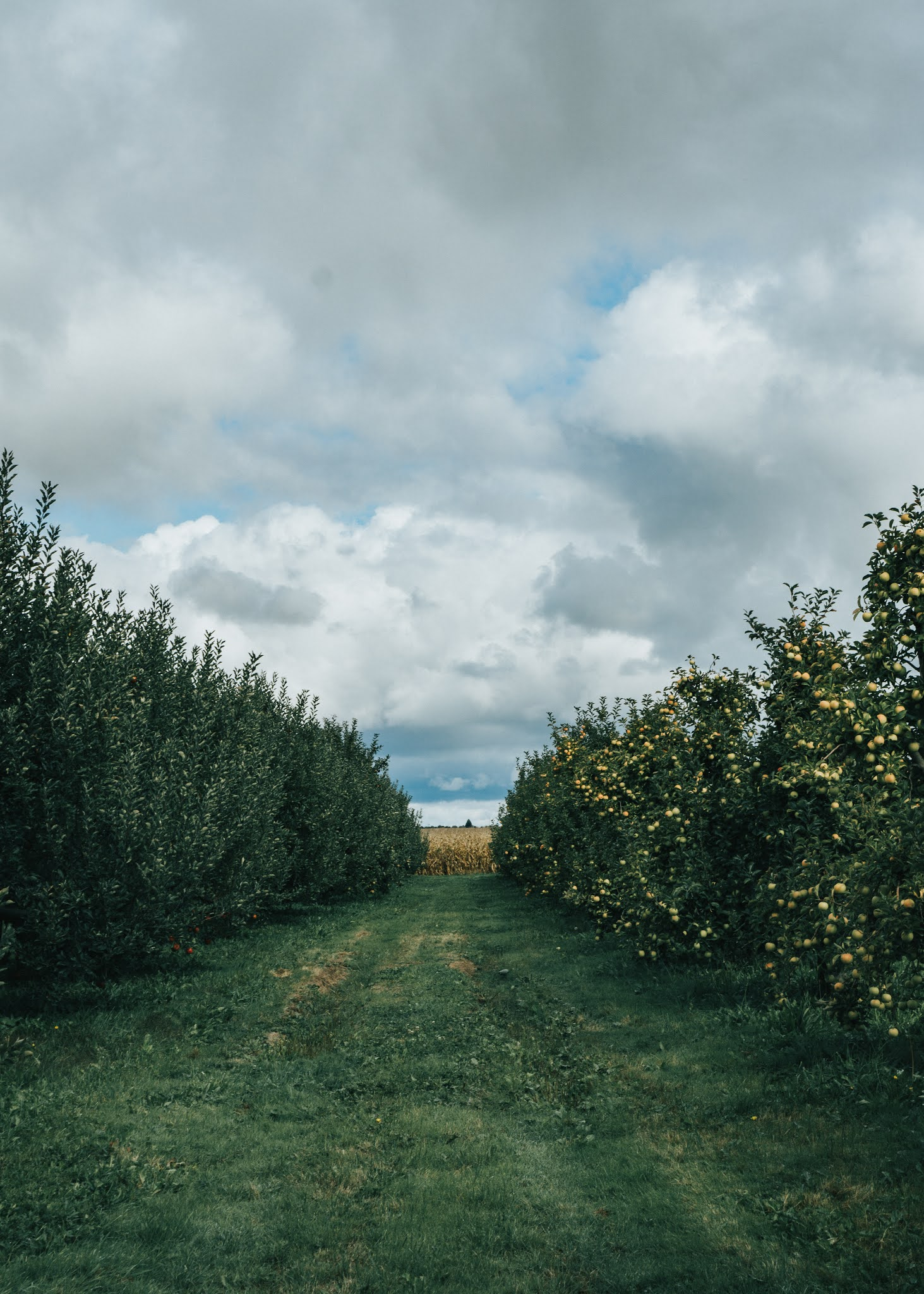My favorite fall activity is apple picking