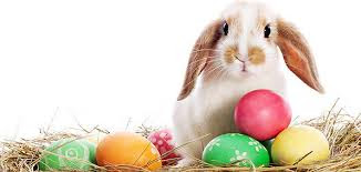 Image of bunny sitting in an Easter basket filled with eggs