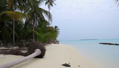 Scientists carry out genetic study on Lakshadweep Islands Residents