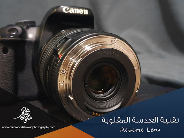 العدسات,عدسات,عدسة,تصوير,كانون,نكيون,تصوير,تصوير الماكرو,ماكرو,طريقة تصوير الماكرو,الماكرو,تصوير الحشرات,العدسة المقلوبة,التصوير الدقيق,تصوير المايكرو,دروس تصوير,صور الماكرو,شرح تصوير الماكرو,فوتوجرافي,كيف تصور الماكرو,تقنية تصوير الماكرو,عجائب تصوير الماكرو,تصوير الورود,macro photography,macro,photography,macro photography ideas,macro photography tutorial,macro photography tips and tricks,photography tips,micro photography,extreme macro photography,macro lens,flower photography,photography for beginners,photography tutorials for beginners,close-up photography,creative photography,abstract photography,macro photography tips,landscape photography,macro photography set up,ultra macro photography,lens,reverse lens,reverse,reverse lens adapter,reverse ring,macro lens,reverse lens macro,reverse macro lens,reverse lens photography,reverse lens macro photography,camera lens,reversed lens,reverse mount,reverse lens mount,reverse lens guide,using a reverse lens,how to reverse a lens,reverse kit lens macro,reverse lens technique,reverse lens mount test,lenses,reverse macro lens guide,reverse lens mount review