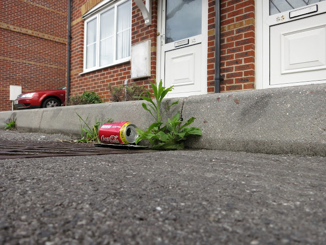 Coca-Cola can and small green plant in kerb beside houses