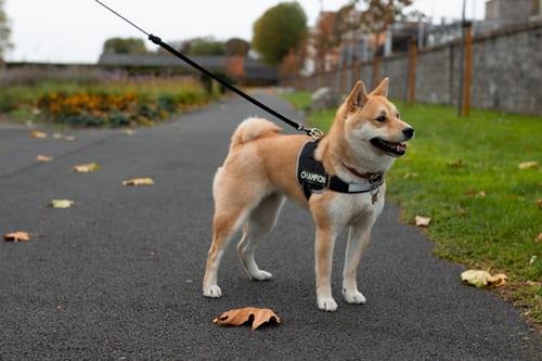 Cari penyebab anjing mimisan untuk mencegah terulang kembali