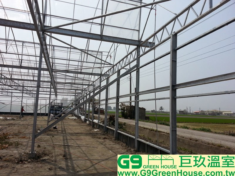 巨玖溫室搭建溫室結構前後風頭採用橫向一排H鋼連接在每一支補強支柱與H鋼支柱讓農友吊掛爬藤網與鋼索完成外觀