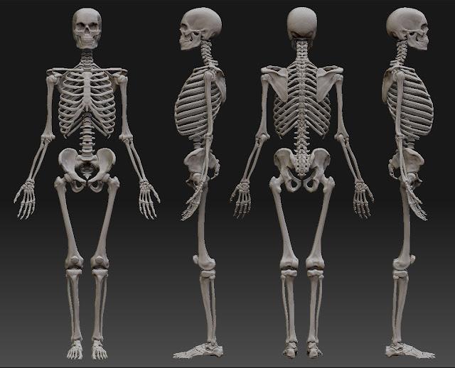 كيفيه تقويه العظام الاساليب العلميه والرياضيه .