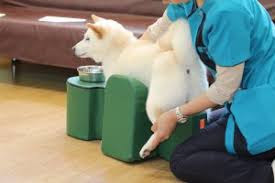massagem em cães paralisados
