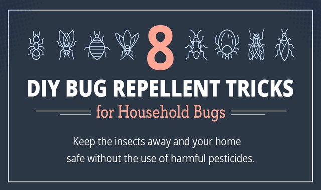 8 DIY Bug Repellent Tricks for Household Bugs