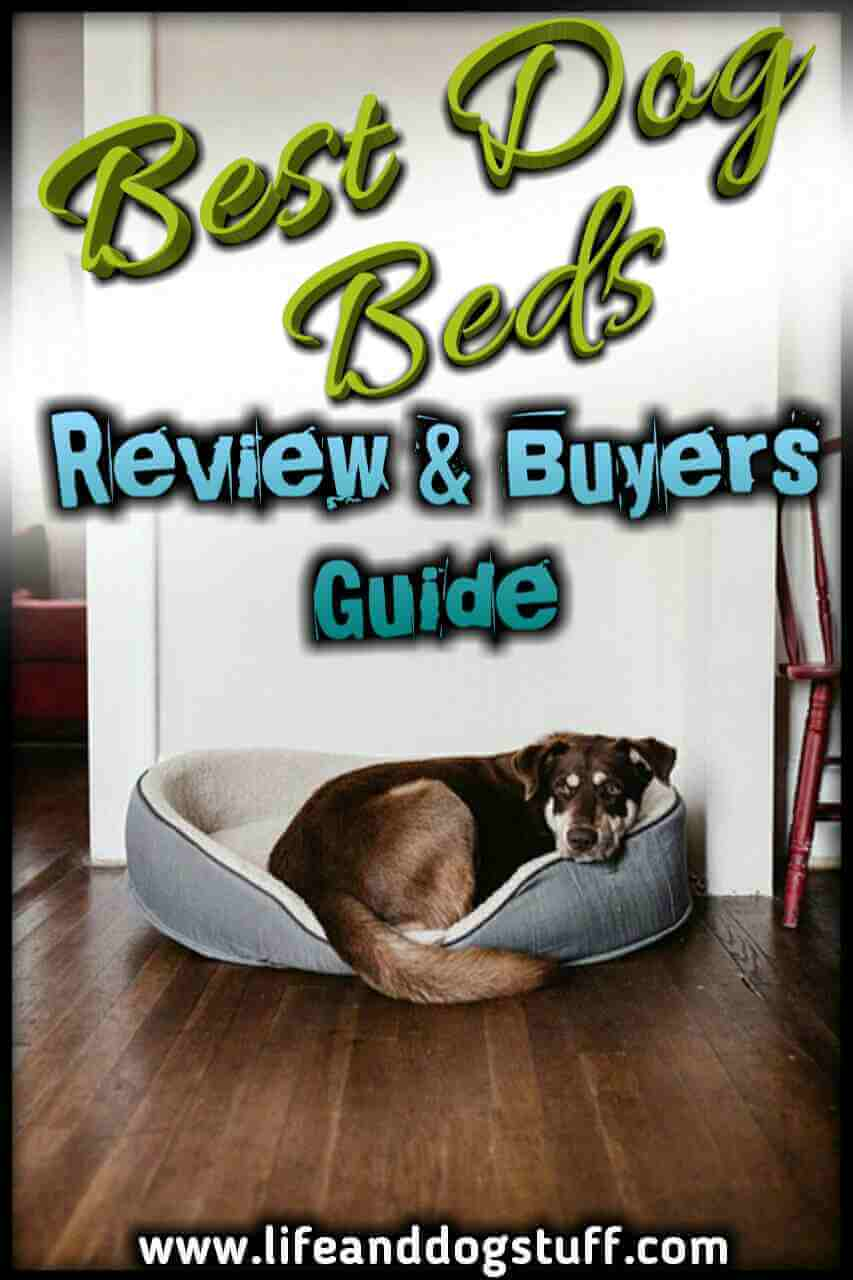 Best Dog Beds Review and Buyer's Guide 2018