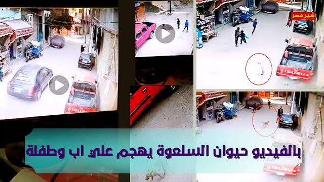 فيديو وصور السلعوه فى المنيا يشعل مواقع التواصل من بعد التهام 8 اطفال