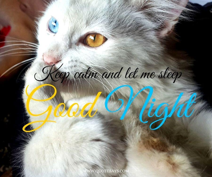 Good Night White Cat