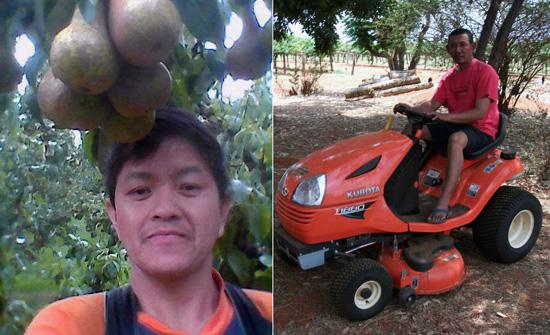 daftar yang sudah bekerja jadi tukang kebun di australia