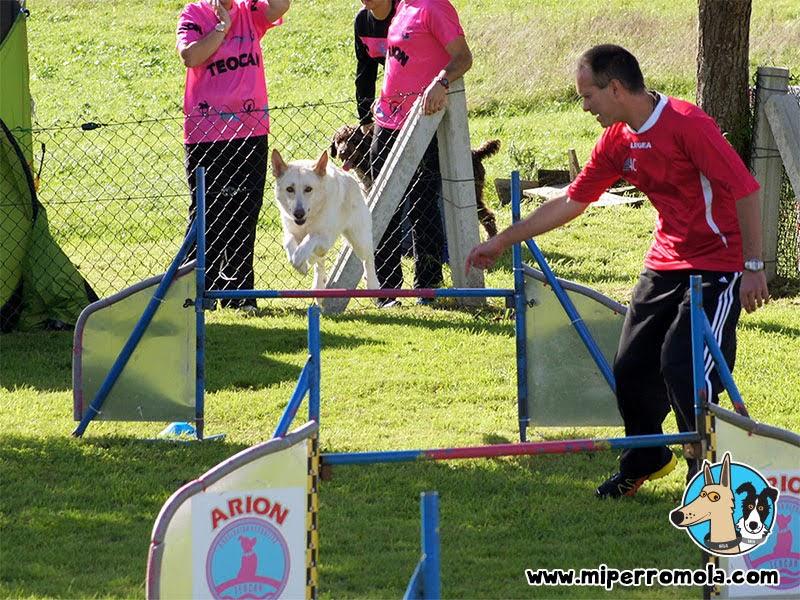 Can de Palleiro compitiendo en una prueba de Agility