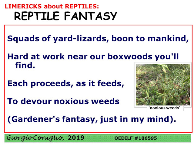 limerick; reptile; lizard; green anole; Carolina anole; Gecko spp.; gardening; Giorgio Coniglio