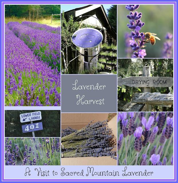 Lavender farm collage
