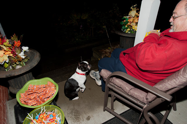 Cute little Boston Terrier makes a halloween visit and gets her goodies.
