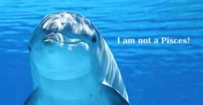sebagian besar dari kita cukup akan segera menjawab ikan paus MENGAPA PAUS DAN LUMBA-LUMBA BUKAN IKAN?
