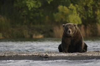 Survey on Himalayan Brown Bear—By ZSI
