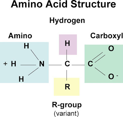 www.arvbiotech.com, Easy Structure of amino acid