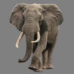 elephant in spanish