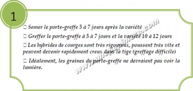 greffage concombre1