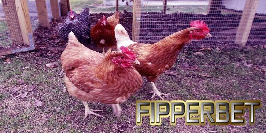 game aduan ayam