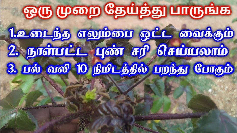 ஒரு முறை தேய்த்து பாருங்க பயங்கரமான பல் வலியும் 10 நிமிஷத்தில் பறக்கும் !