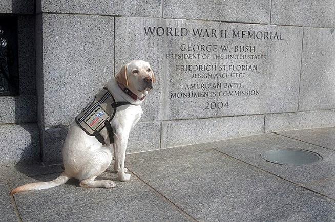 Service Dogs, Sully, George H. W. Bush on Memorial Day