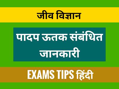 Plant Tissue, पादप ऊतक, पादप ऊतक संबंधित जानकारी, Plant Tissue Related Knowledge in Hindi