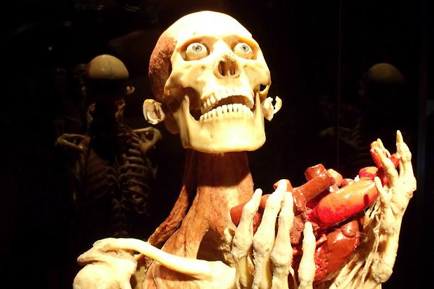 Human Body Exhibit World