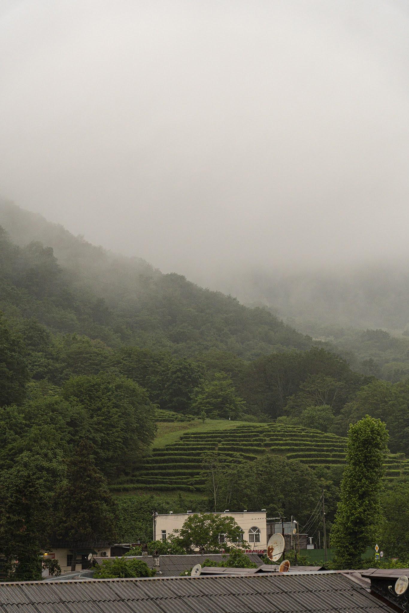 Dagomys Volkovka tea plantations fog mountains hills cloud spreads photo Igor Novik
