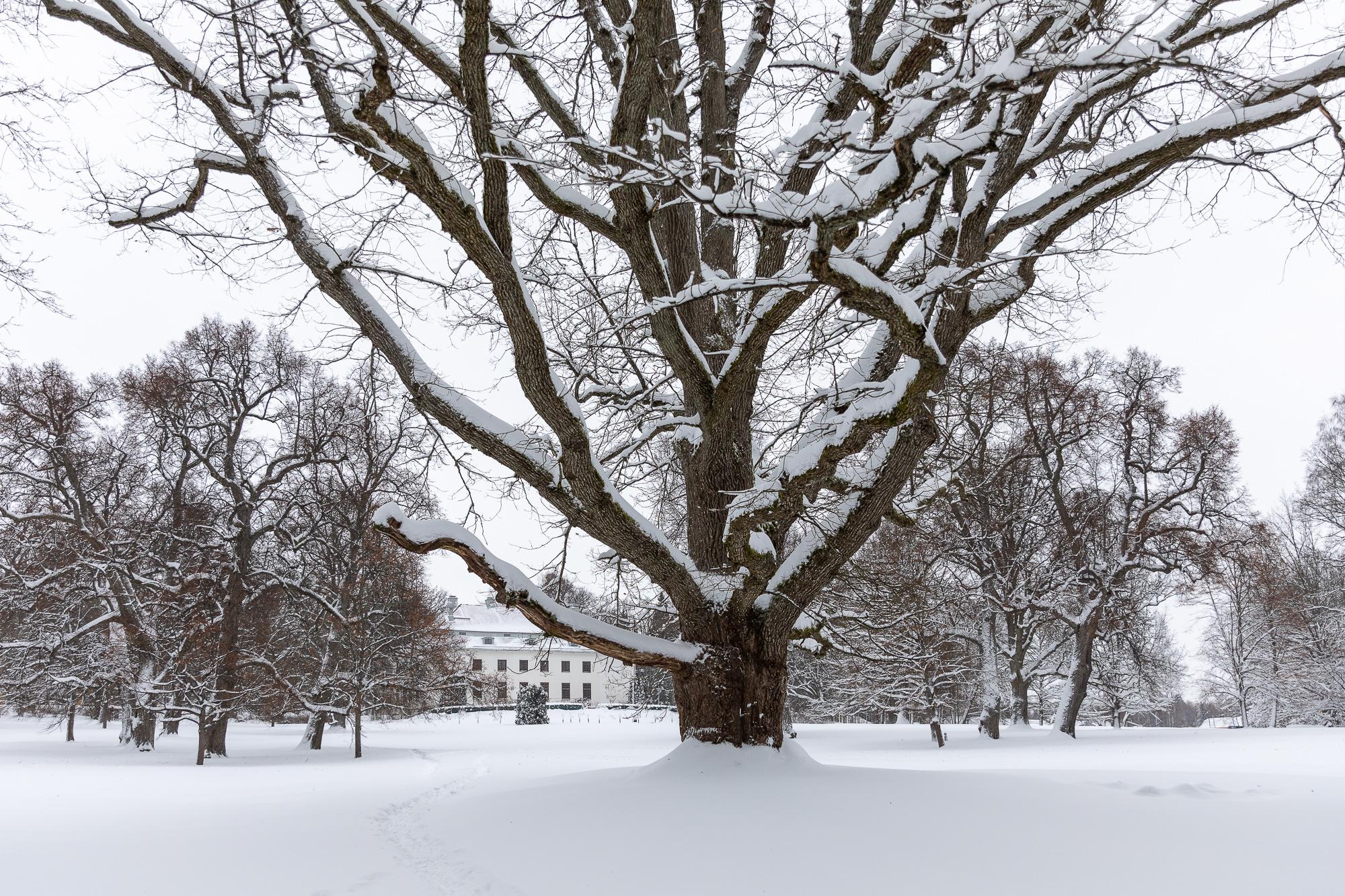talvi, winter, suomi, finland, visitfinland, finlandphotolovers, luonto, nature, visualaddict, visualaddictfrida, valokuvaaja, photographer, Frida Steiner, Auroran puisto, Espoo