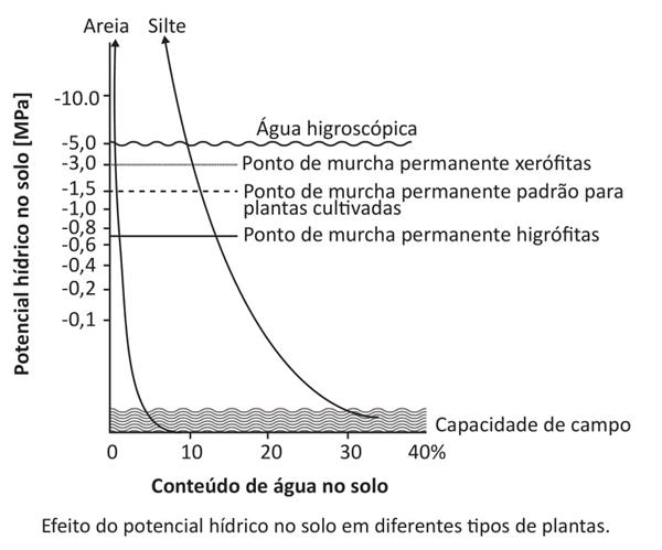 Efeito do potencial hídrico no solo em diferentes tipos de plantas