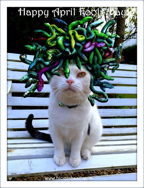 Moodusa April Fools Day ©BionicBasil® The Pet Parade 346