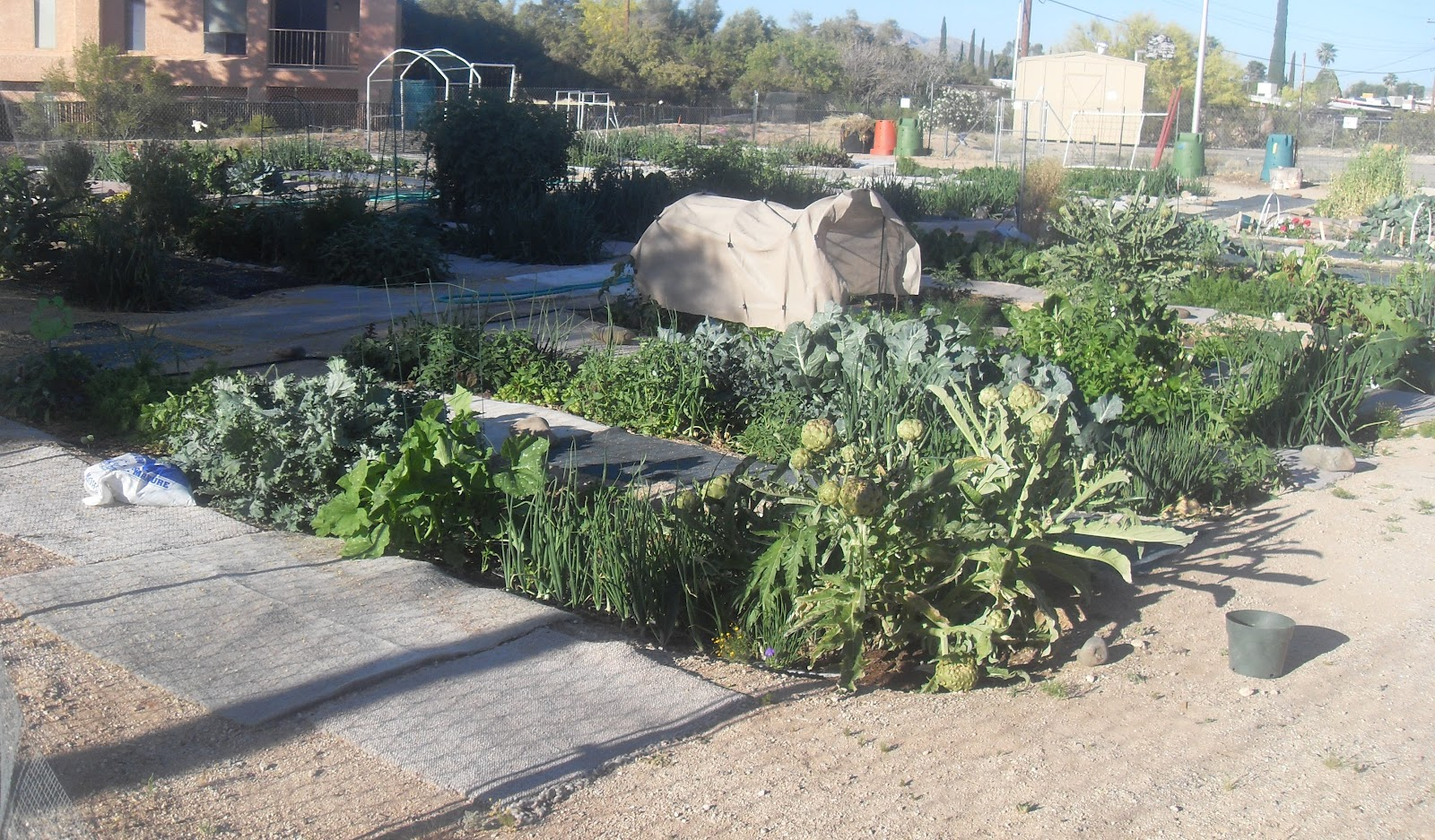 The Community Gardens Of Tucsonu0027s New Spirit Garden