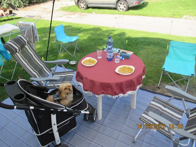 Bronco im Campingurlaub in Zeeland im InnoPet Monaco Hundewagen