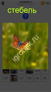 800 слов бабочка на стебле сидит 1 уровень