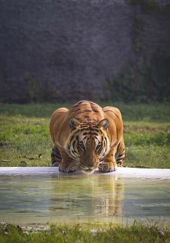 Jim Corbett National Park story tiger