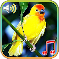Birds Sounds Ringtones & Wallpapers Apk Download for Android