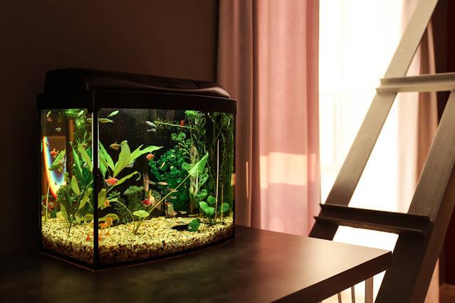 Manfaat Mempunyai Aquarium