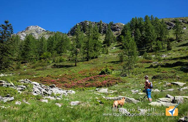 Panorama sul sentiero che sale all'alpe Porcaresc