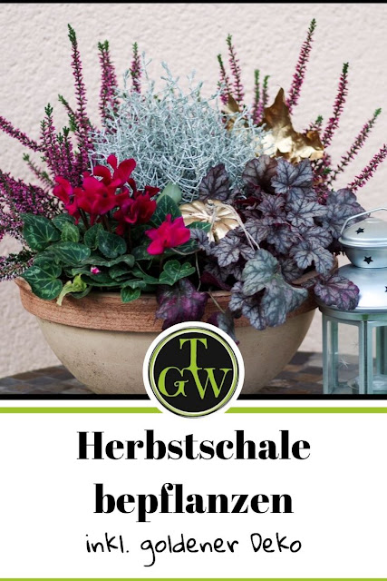 Herbstschale bepflanzen für draußen mit Heide - Gartenblog Topfgartenwelt