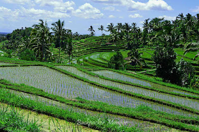 Terrasering Jatiluwih Rice Terrace yang indah - Backpacker Manyar