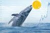 Bitcoin whale who sold at $58K has reaccumulated 3,521 BTC