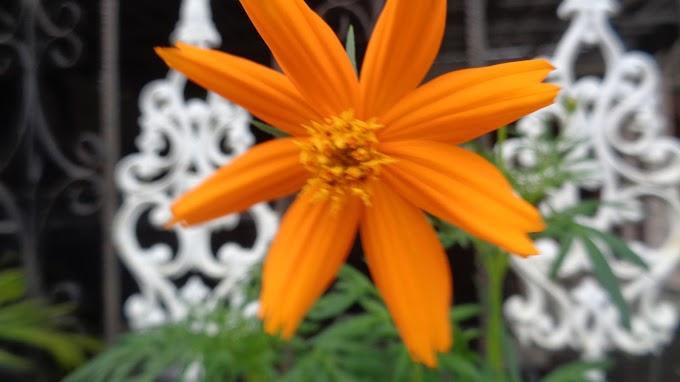 Bunga Kuning yang indah