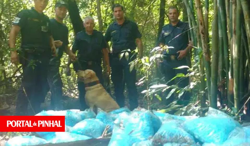 GCM descobre refinaria e apreende 7kg de cocaína na zona rural de Itapira (SP)