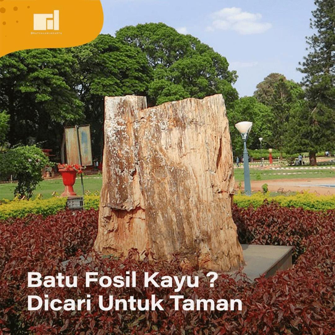 fosil kayu