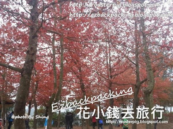 2021年香港紅葉好去處+9月16日銀杏紅葉變色情報