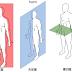 了解脊椎側彎姿勢結構的問題-什麼是三度空間的偏位