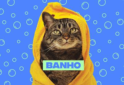 Gatos devem tomar banho?