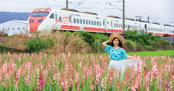 彰化社頭「雙鐵花田」劍蘭花海搭配火車好好拍,入園還送花束