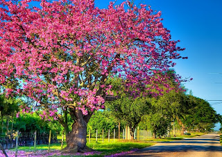 Help Deciding Which Tropical Climate Trees To Plant As. Aarp Hartford My Policy Help Desk Open Source. Bio Analytical Systems Southwest City College. Microsoft Business Antivirus. What Is Oil And Gas Accounting. Pest Control Allentown Pa Porsche 928 Wanted. Basement Waterproofing Grand Rapids Mi. Gastric Bypass Surgery Statistics. Online Educational Psychology Masters Degree